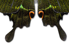 Butterfly wing. Closeup green butterfly wing background Royalty Free Stock Photography