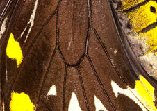 Butterfly Wing Detail Stock Photo