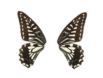 Butterfly wing isolated royalty free stock photography