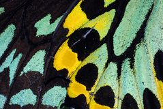 Butterfly Wing Macro royalty free stock photo