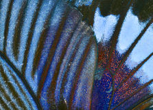 Butterfly Wing. Macro close up of an Monarch Butterfly Wing Stock Photography