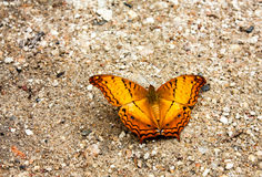 Butterfly wing. Orang wing butterfly on the sand Stock Photography