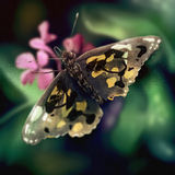 Butterfly Wing Pattern - Digital Painting. Digital painting of a butterfly with an abstract wing pattern standing on a garden plant with pink flowers Stock Photos
