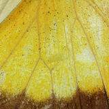 Butterfly wing texture Royalty Free Stock Photo