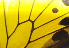 Butterfly wing yellow. Macro background stock photo