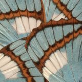 Butterfly wings background with blue and brown textures and details stock images