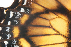 Butterfly wings. Royalty Free Stock Photo