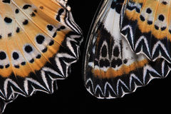 Butterfly wings. Close-up. Butterfly wings (The Leopard Lacewing) isolated on black background royalty free stock photography