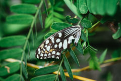 Butterfly wings on the green leaf tree royalty free stock photo