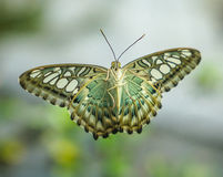 Butterfly with wings open on a glass door Royalty Free Stock Image