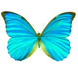 Butterfly with wings painted in cyan. Isolated on a white background