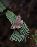 On Butterfly Wings. Butterfly resting on fern leaf Royalty Free Stock Images