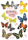 Butterfly wings set in real size Stock Photography