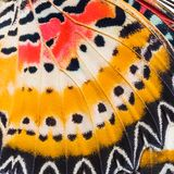 Butterfly wings texture. Close up of wings of Leopard Lacewing Cethosia cyane showing minute scales Stock Image