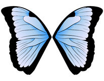 Butterfly Wings Royalty Free Stock Images