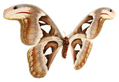 Butterfly wings on a white background Royalty Free Stock Photo