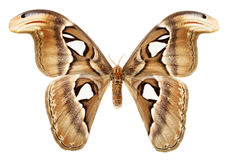 Butterfly wings on a white background Stock Photo