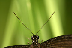 Free Butterfly With Antennae Stock Image - 5643651