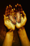 Butterfly in a woman hands Royalty Free Stock Photos