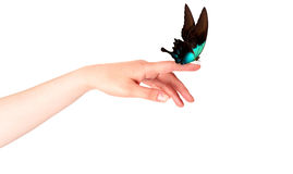 Butterfly on woman's hand. In motion Royalty Free Stock Images