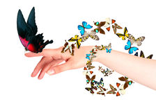 Butterfly on woman's hand. In motion Stock Images