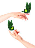 Butterfly on woman's hand. In motion Royalty Free Stock Photo
