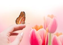 Butterfly on woman's hand and tulips Stock Image