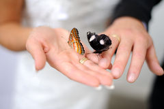 Butterfly in women and mens hands Royalty Free Stock Photo