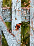 Butterfly on wooden fence Stock Photo