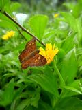 A Butterfly on Flower Stock Images