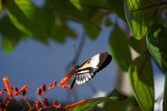 Butterfly World, Florida Stock Photos
