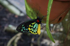 Butterfly World, Florida Royalty Free Stock Images