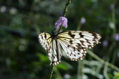 Butterfly World, Florida Stock Image