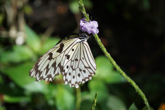 Butterfly World, Florida Royalty Free Stock Photos