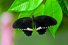 Butterfly World Royalty Free Stock Photography