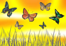 Butterfly in yellow Royalty Free Stock Images