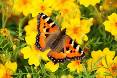 The butterfly on yellow colors Stock Image