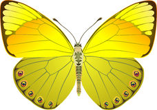 Butterfly yellow fantasy Stock Images