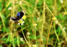 Butterfly on a yellow flower Stock Photography
