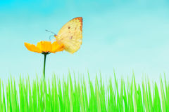 Butterfly and yellow flower and green grass Royalty Free Stock Image