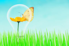 Butterfly and yellow flower and green grass with light bulb Royalty Free Stock Photography