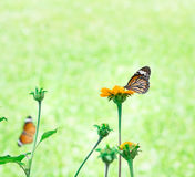 Butterfly on yellow flower. With light bokeh Royalty Free Stock Photography
