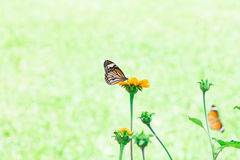Butterfly on yellow flower. With light bokeh Royalty Free Stock Photos