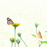 Butterfly on yellow flower. With light bokeh Stock Photography