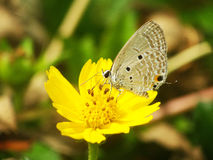 Butterfly on yellow flower. In nature Royalty Free Stock Images