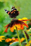 The butterfly flower Stock Photography
