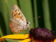 Butterfly. On yellow flower sipped nectar Stock Photos