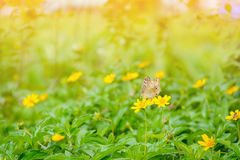 Butterfly on yellow flowers nature background Stock Photos