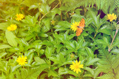 Butterfly on yellow flowers nature background Stock Photo