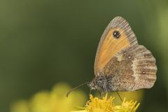 A butterfly on yellow flowers on Southampton Common stock images